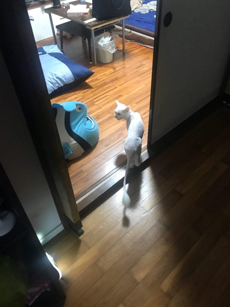 猫 カット 失敗